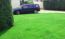 Renovated lawn green grass