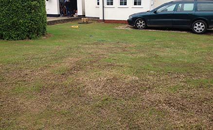 Photo of a re-seeded lawn a week after seeding