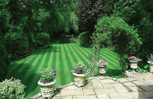 Lawn care results after lawn care treatments.